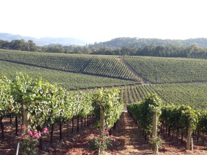 top 10 napa valley wineries