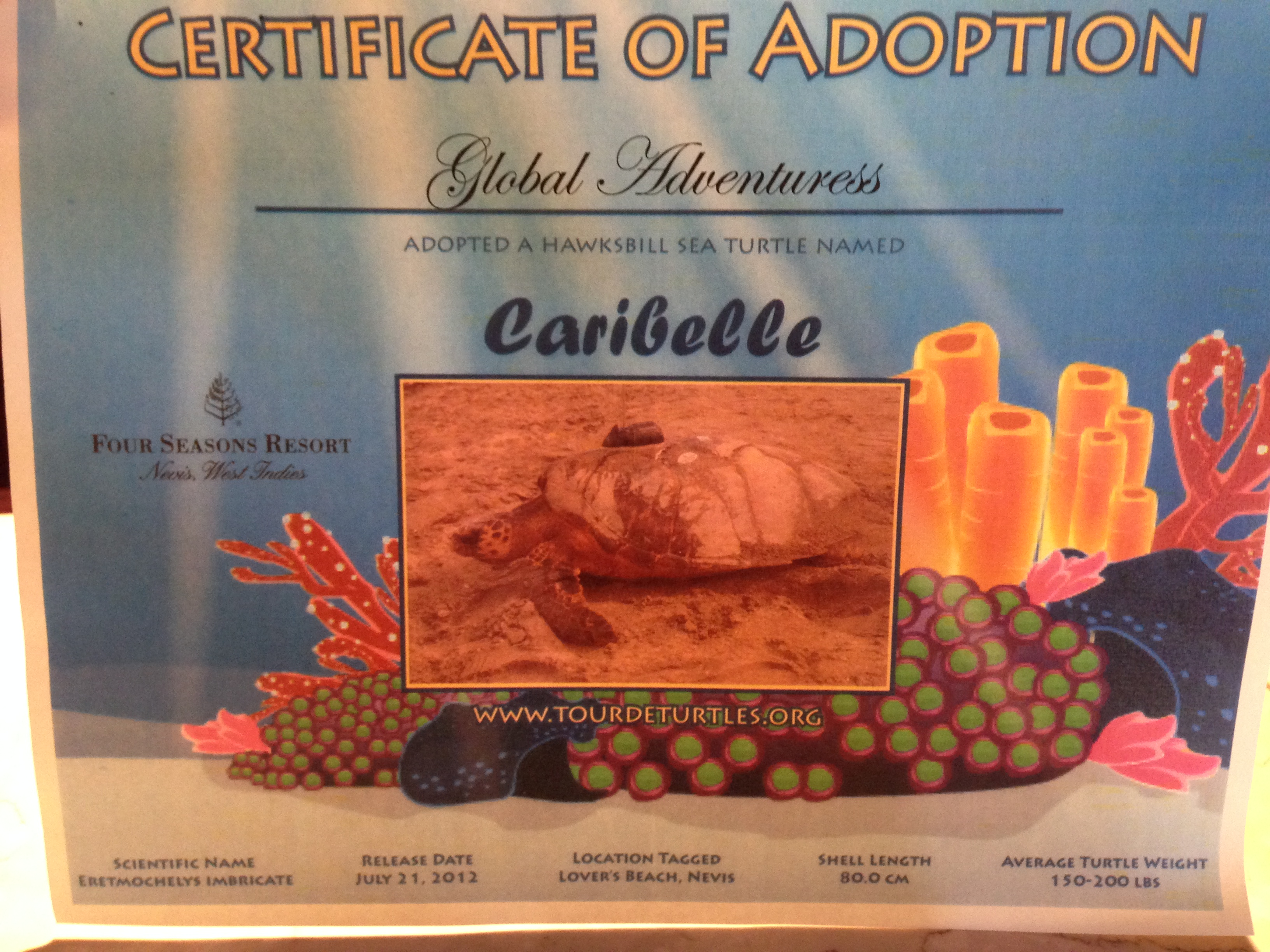 We Adopted a Turtle!  Her Name is Caribelle…