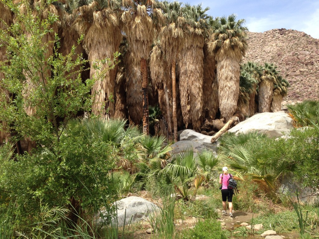 day trip palm springs