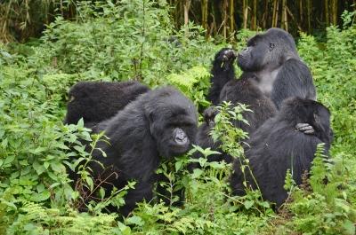 72 Hours in Rwanda