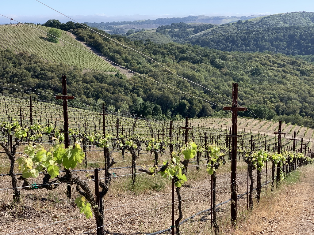 Top Wineries in Paso Robles